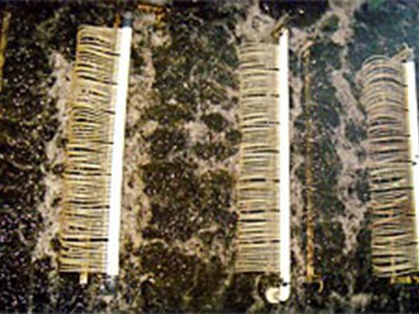 生物膜反应器